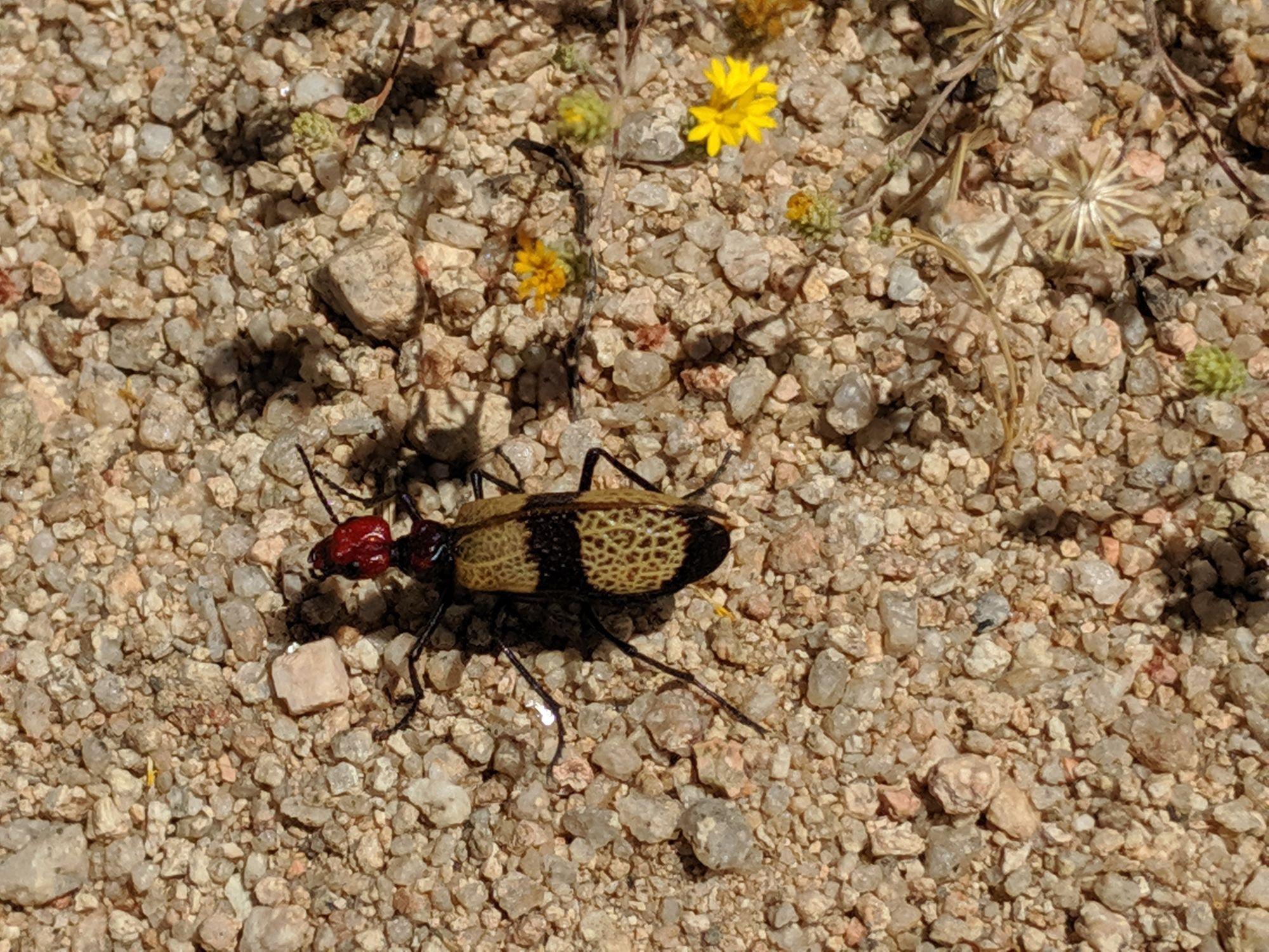 Desert wildlife
