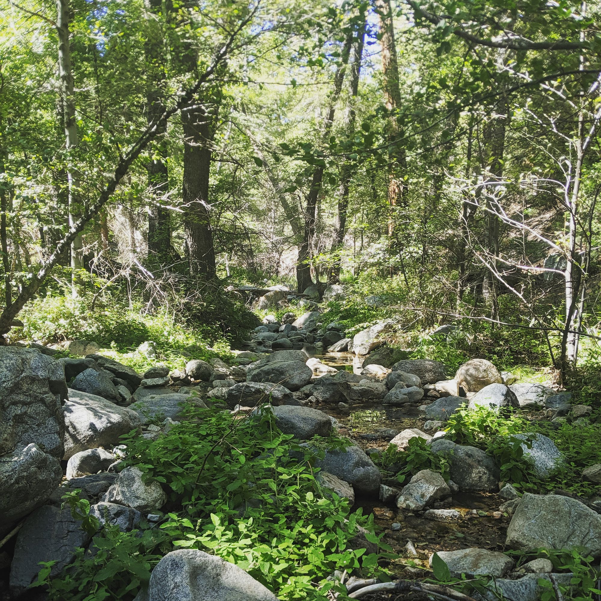 A creek!